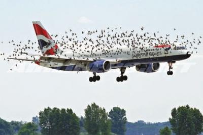 「高容量」单通道飞机