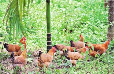 位於海南省澄迈县加笼坪热带雨林自然保护区的