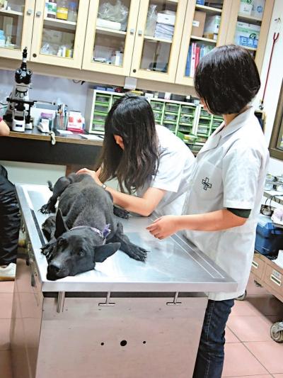 科技大学学生在动物医院